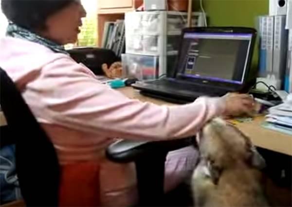 這隻哈士奇就是不讓主人碰電腦,而牠使用的絕招一定會讓你驚呼:超可愛!