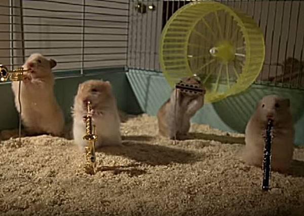 這次小倉鼠沒有要吃東西賣萌,牠們要組成樂團靠實力攻占你的心!