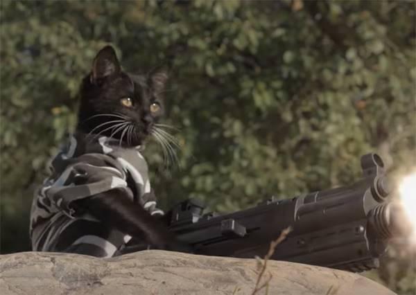 誰來救救我!小貓慘被殭屍大軍包圍,喵星人聯萌能否成功救下牠?(結局超展開)