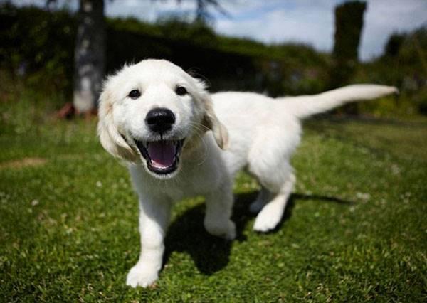 節目裡的忠犬會救主,男子故意假裝昏倒測試家裡狗狗的反應,實驗結果讓大家都笑了!
