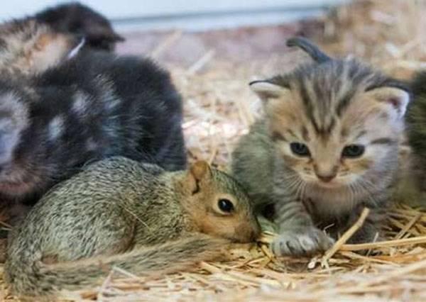 誰說貓咪一定抓老鼠,他們的關係好到完全顛覆你的想像!