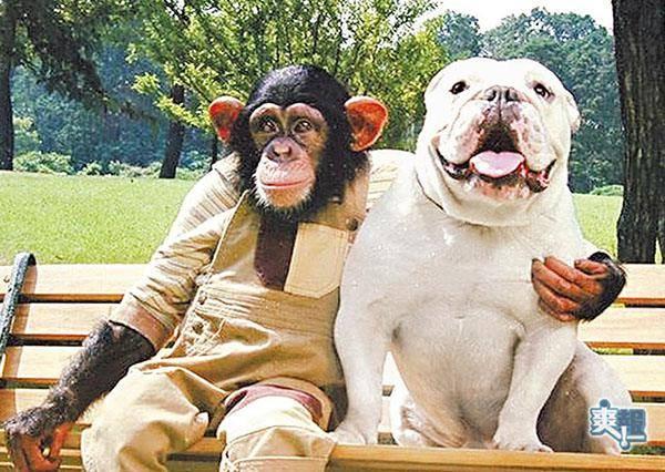 看著這群剛出生的狗寶寶,小猴子伸手做出最暖心的動作!