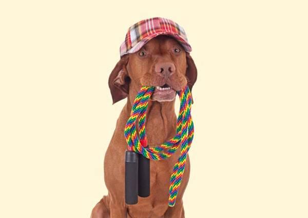 這隻小狗被全鎮人當作神犬照料,因為牠不僅聰明,還是史上第一個會玩㊙㊙的汪星人!