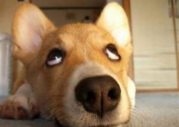 狗狗堅信自己被關在玻璃門外面,直到0:46秒主人做了這個動作,牠才肯進屋!