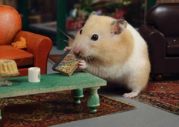 當六人行主角珍妮佛安妮斯頓換成小倉鼠來演時,所有看過的人都想「抱緊」處理阿!