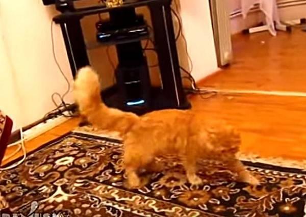 貓咪竟然被瑪莉歐附身?與畫面神同步的動作實在太驚人
