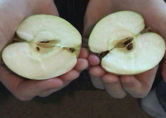 連刀子都不用洗!教你如何輕鬆一掰,就讓蘋果變兩半