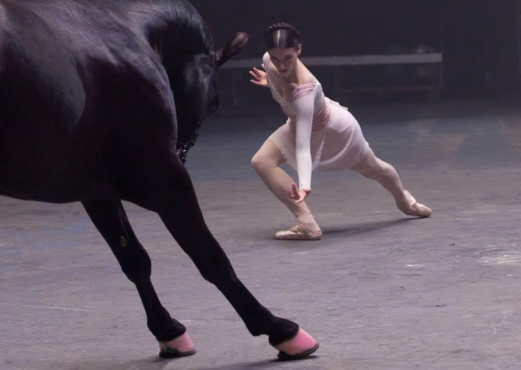 專業舞者進場battle 但要跟她們PK舞技的竟然是一匹馬?