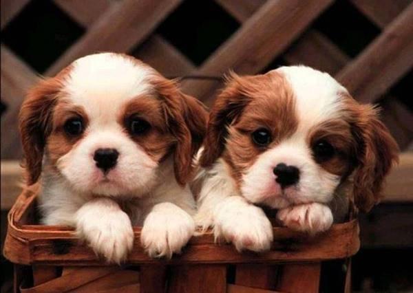 如果你覺得自己不夠好,一定要看看這9隻因不完美而完美的殘障寵物!