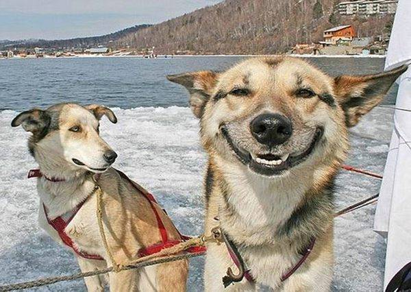 媽媽想拍下女兒和愛犬的合照,當她說出「微笑」,狗狗竟然做了天才般的回應!