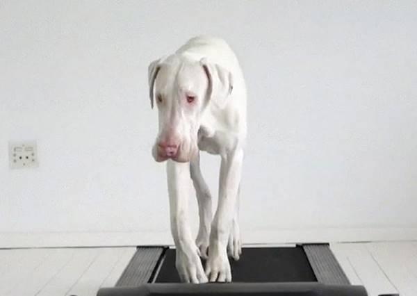 醫生都說這隻狗狗又瞎又聾又病活不久,但主人鏡頭下的牠每天都記錄著奇蹟的發生!