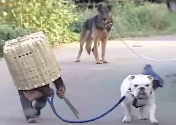 面對兇猛惡犬同伴竟然自己落跑?小猩猩用了所有靈長類都會想到的絕招對付牠!