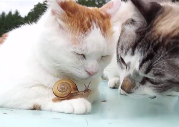 當兩隻貓咪碰上蝸牛,最溫馨的爭寵故事就此展開...