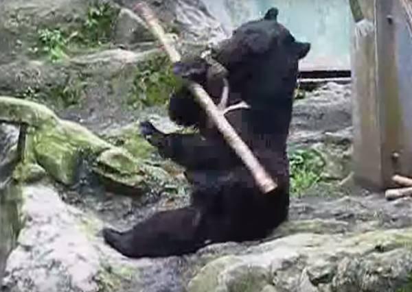 當黑熊拿到竹竿後的精采演出...讓《功夫熊貓》根本不夠看了!