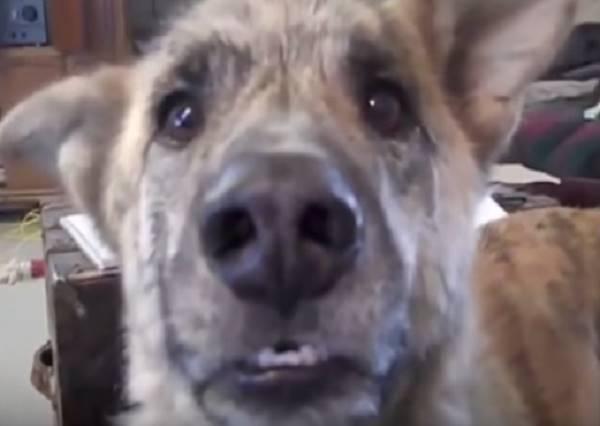主人只不過和狗狗說了一段話,居然就能成為Youtube年度十大熱門影片之一!?