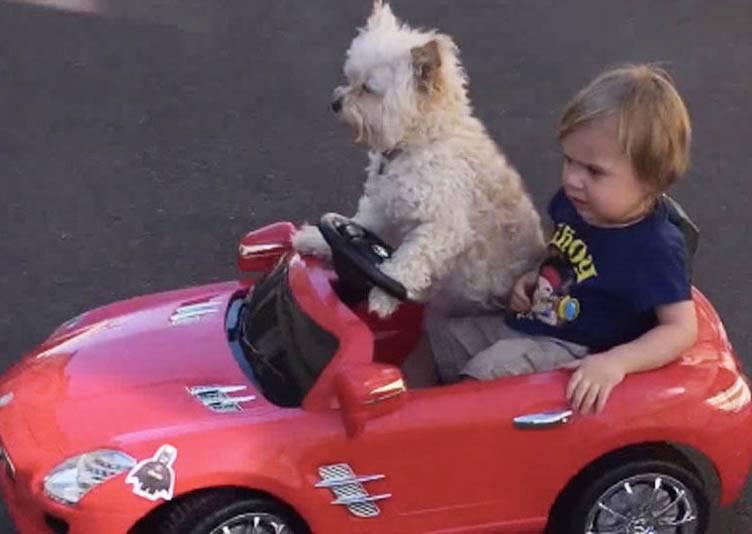 還以為是小主人載著萌寵兜風去,鏡頭拉近才發現駕駛根本不是人!?