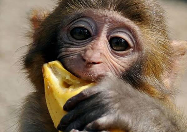 像猴子一樣一秒剝乾淨,原來這麼多年我都不知道正確的香蕉剝皮法...