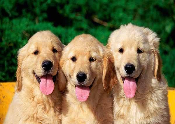 影音/別哭!狗狗永遠是我們身邊最貼心的好朋友