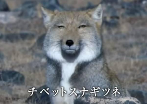 翻白眼還不夠欠揍!面對裝熟達人現在流行「藏狐臉」
