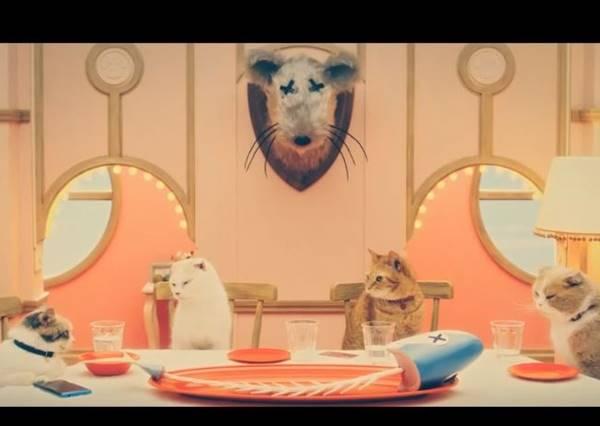 史上第一部貓咪連續劇!從頭喵到尾真的超犯規