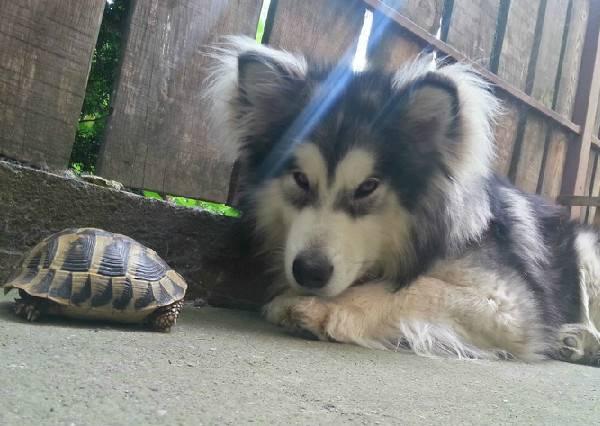 面對不斷想找牠玩的小烏龜,汪星人竟然是這種反應!?