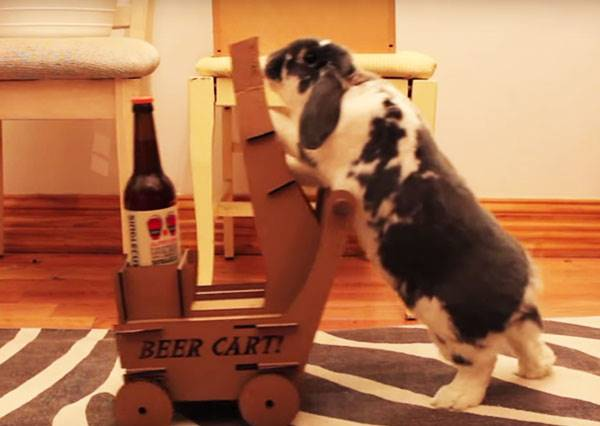 這個養兔子的男人靈機一動,決定向大家推廣正港「兔女郎」送啤酒有多讓人想摸一把!?