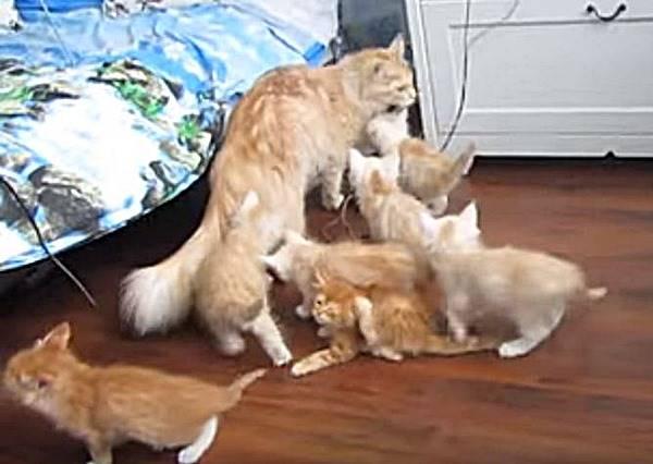 貓媽媽想暫時逃離黏人的貓孩子,牠奮力一跳,結果超悲劇...