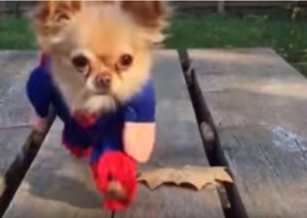 這些「超級狗英雄」不但化身小超人解救同伴,還會幫主人㊙㊙㊙!