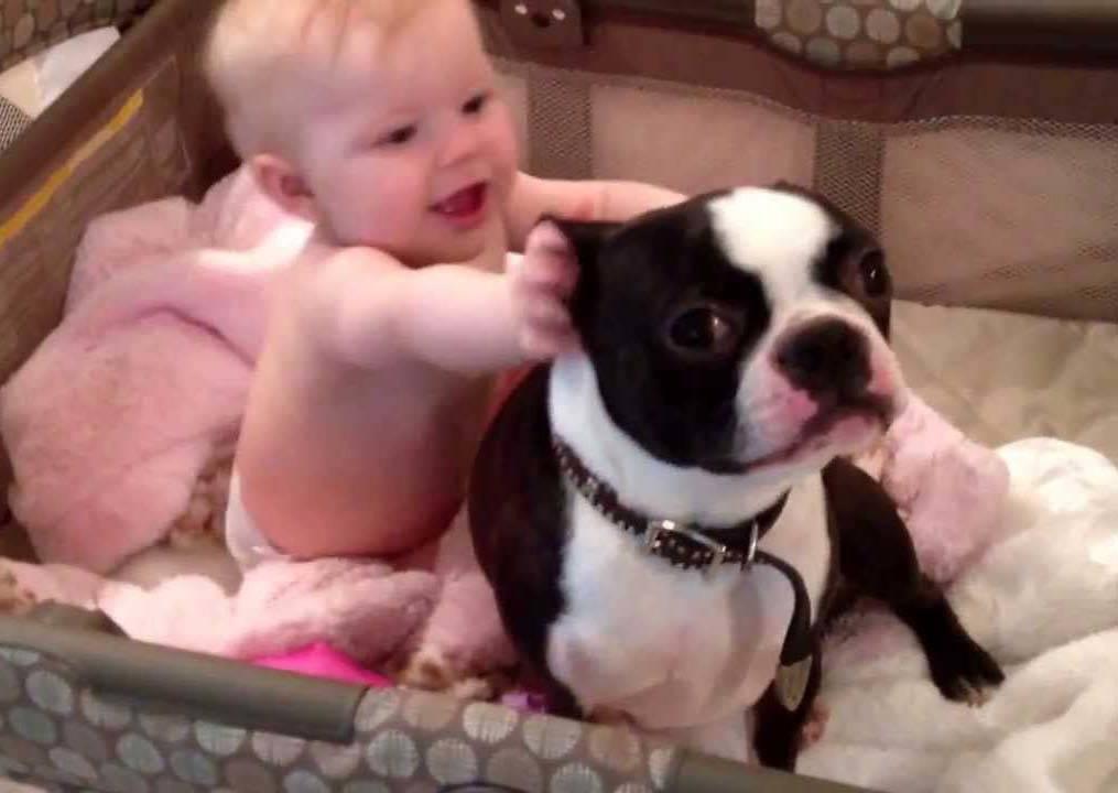 狗狗原本瘋狂的在床上床下奔跑,但當小主人一伸手牠立刻這麼做..