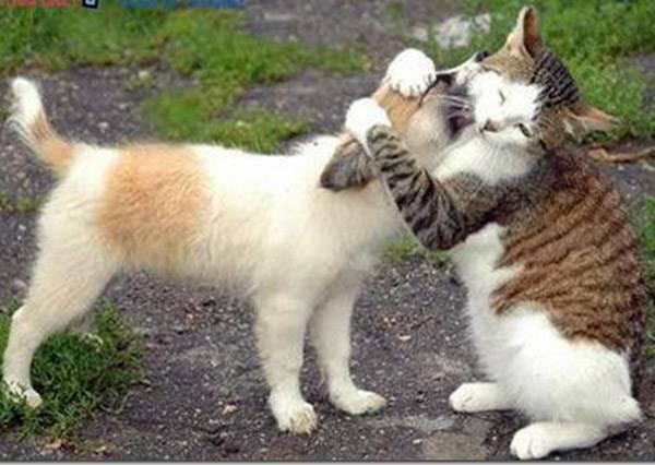 「熱吻對朕來說只是小case!」不管激動狗怎麼示愛都無所謂的淡定喵星人