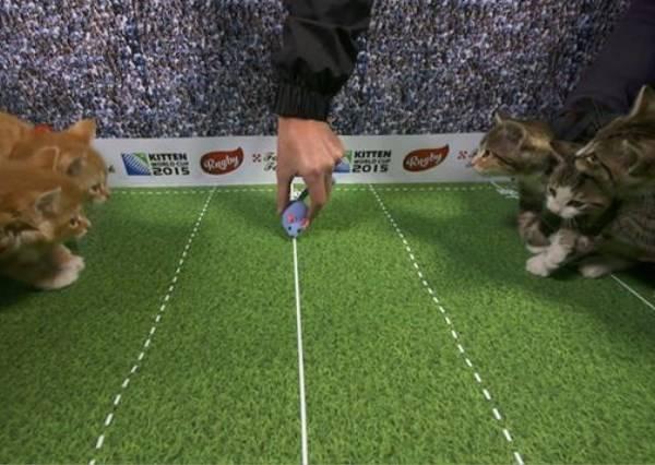 當球換成老鼠玩具,最可愛的貓咪世界盃立即開戰!