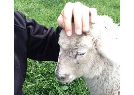 后宮真煩傳!綿羊與狗竟為討摸摸開發出最過分的賣萌招