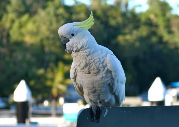 當主人播音樂後鸚鵡就開始跳起舞來,尤其1:06秒後證明牠根本就是綜藝咖!