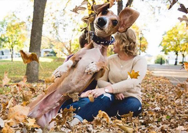 女主人在拍甜蜜訂婚照的時候,狗狗竟然醋性大發闖進去,反而拍出最可愛的畫面!