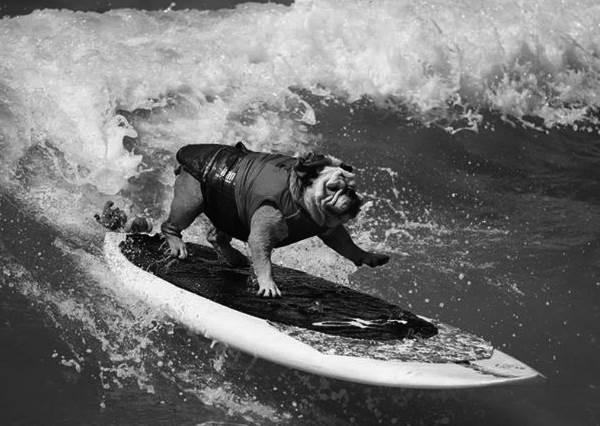 天堂要多一隻能乘風破浪的天使了!玩滑板玩到拿金氏紀錄的傳奇神犬