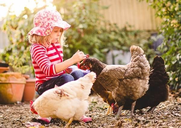 小女孩教寵物過障礙賽已經夠可愛了,但第14秒小雞通過最後一關的瞬間才真正會讓人融化~~