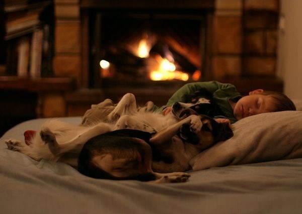 這隻狗狗不但會幫小主人蓋棉被,所有媽媽該做的哄睡工作牠都會!?