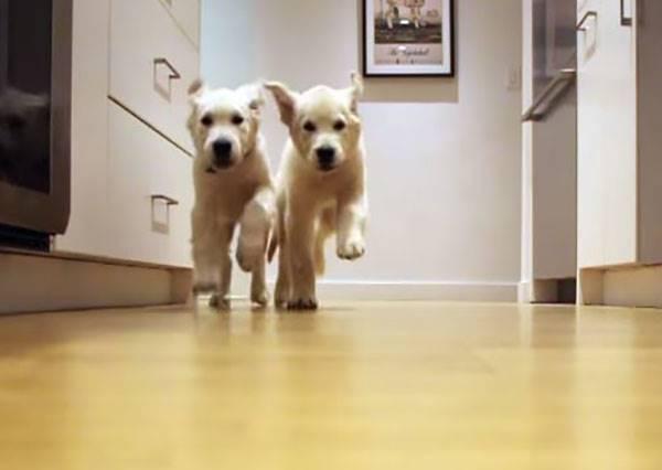 影音/只要一聽到飼料聲 這些小狗們永遠這麼興奮