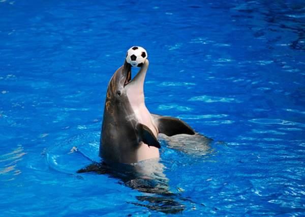 最不可思議的保母!小男童把球丟向海豚後,一人一豚竟開心玩起傳接球...