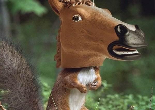 擋不住美味花生...原來小松鼠也會有想要變身馬兒的時候?