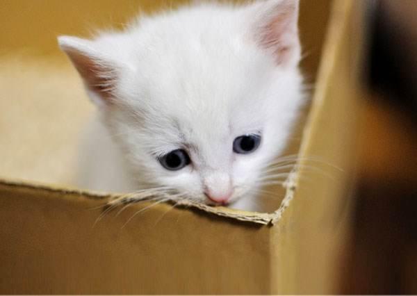這隻小貓一直努力挖著面紙盒,裡面藏著的最終答案絕對會萌翻你!