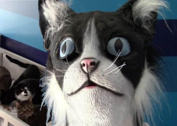 這個主人戴上貓面具想和貓咪變好友,當他轉過身後,除了貓以外所有人都笑到倒地!