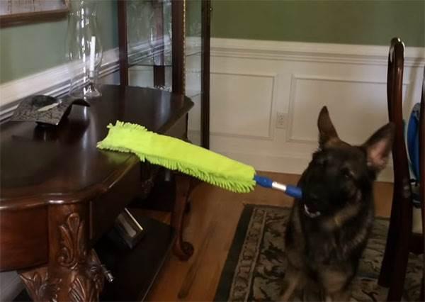 世上唯一一隻自發性打掃的狗狗?!看完牠做的5件家事,就知道養牠的CP值有多高啊(啾咪)