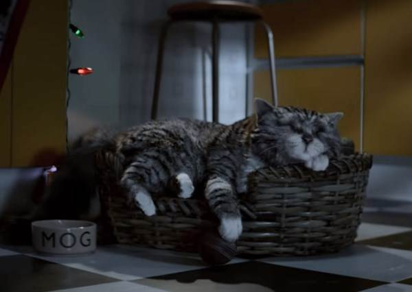 這隻小貓因為做噩夢時的小洞動讓家中差點燒起來,結果主人不但沒有生氣反而還很感謝牠!?
