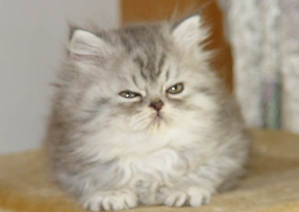 貓咪邪惡的一面終於被揭露,但牠的這些舉動就是讓貓奴欲罷不能的所在啊!