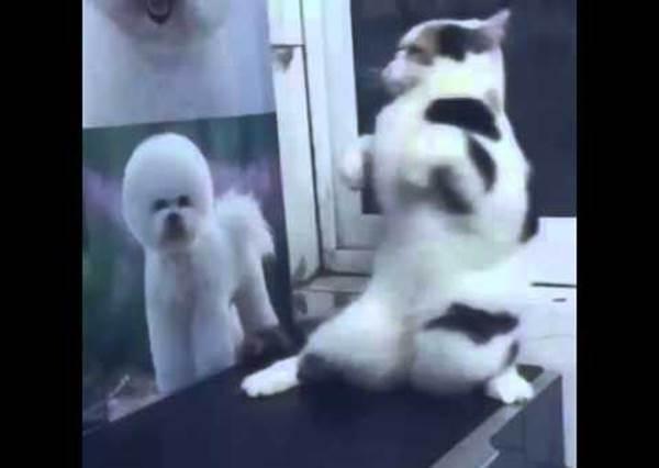像被施了咒語一樣,突然站起來扭扭扭跳舞的貓咪,到底是怎麼了呢~