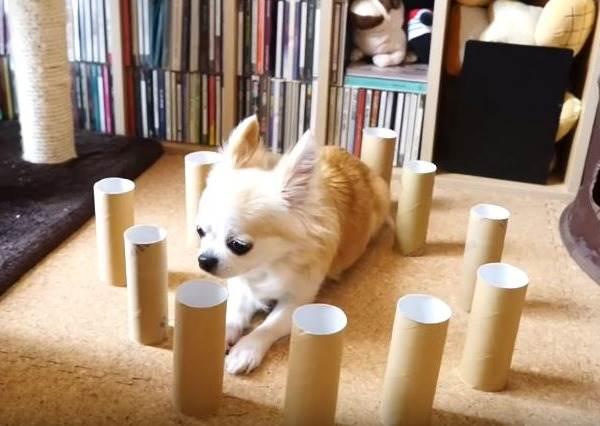 被東西困住怎麼辦?貓咪、狗狗反應差超大!