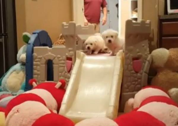 爸媽在屋裡蓋溜滑梯小城堡不稀奇,看到從上面溜下來的小肉球們才真的萌爆你的心!