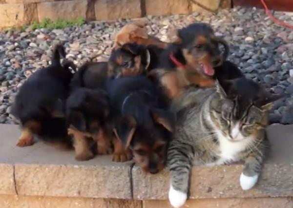一群小小狗向修身養性的喵喵使出纏人攻擊,第47秒貓咪竟使出「最佛心」的還擊!