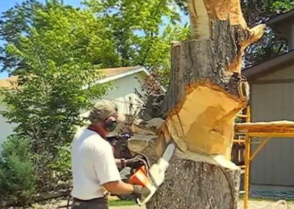 他們找了工人來鋸院子裡的樹,等完成後,所有鄰居都羨慕死了!